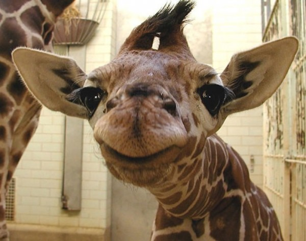 animales-sonriendo-10