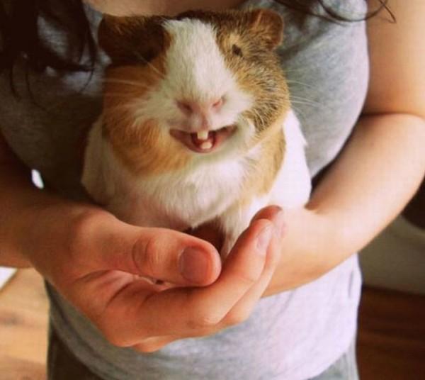 animales-sonriendo-11