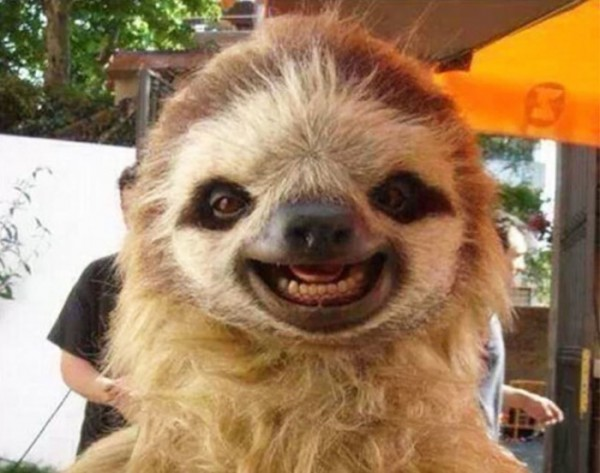 animales-sonriendo-29