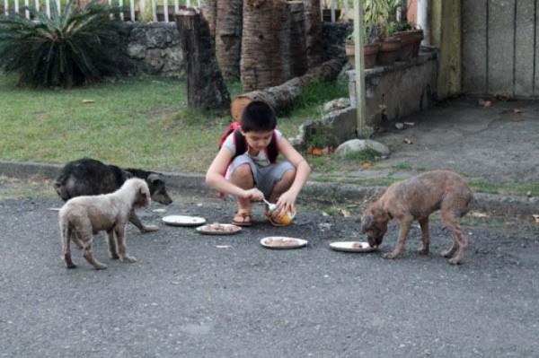 chico-construye-refugio-para-animales-00
