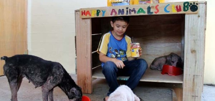 chico-construye-refugio-para-animales-05