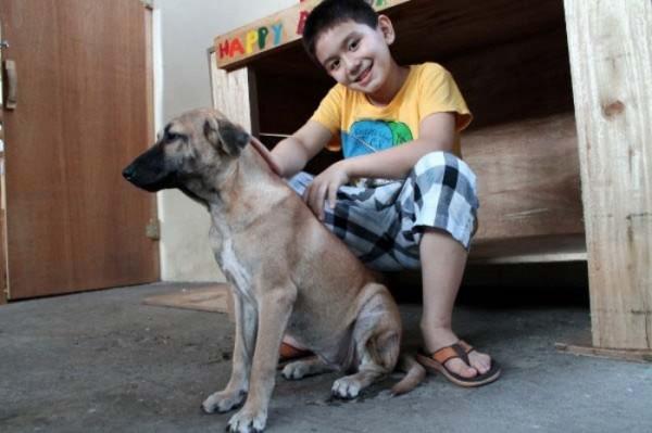 chico-construye-refugio-para-animales-09