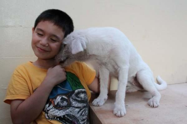chico-construye-refugio-para-animales-10