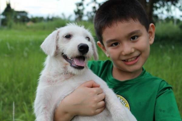 chico-construye-refugio-para-animales-11