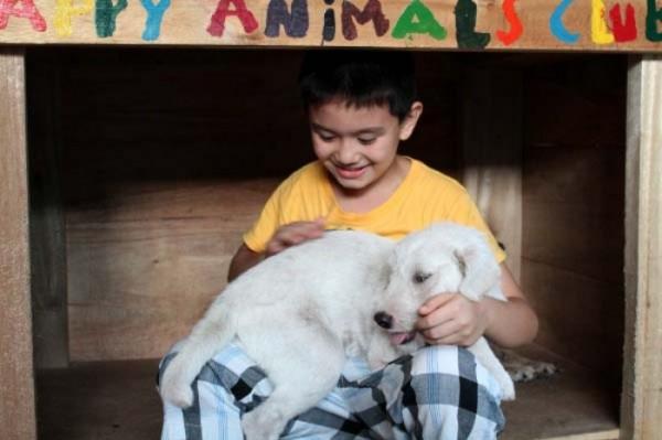 chico-construye-refugio-para-animales-12