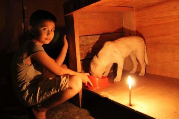 chico-construye-refugio-para-animales-14