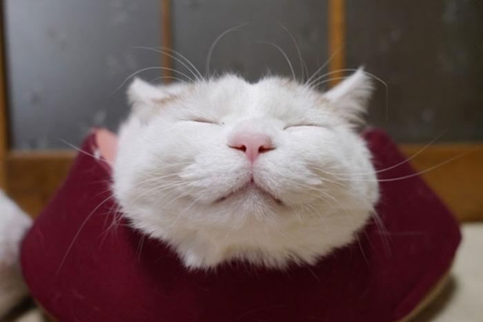 gato,dormido,feliz,00