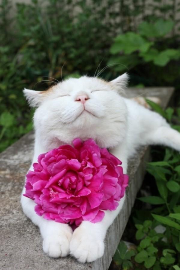 gato-dormido-feliz-01
