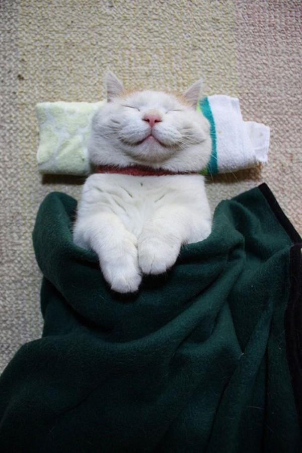 gato-dormido-feliz-04