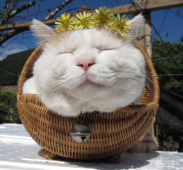 gato-dormido-feliz-07