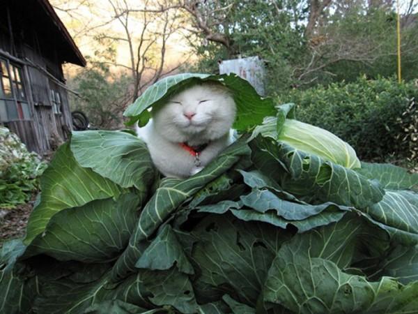 gato-dormido-feliz-08
