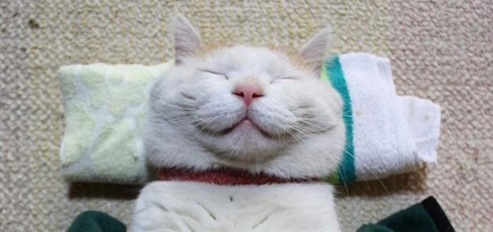 gato-dormido-feliz-10