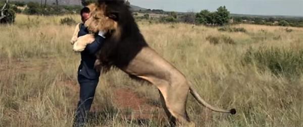jugando-con-leones-salvajes-05
