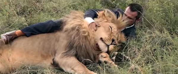jugando-con-leones-salvajes-07