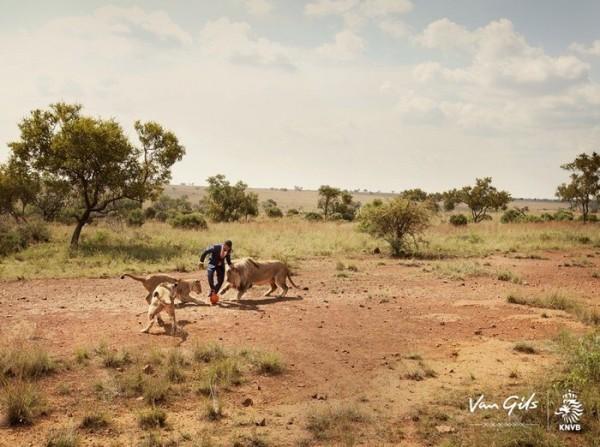 jugando-con-leones-salvajes-10