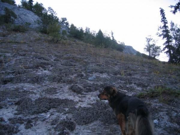 mason-perro-heroe-salvador-12
