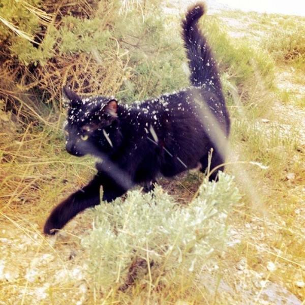 millie-gato-escalador-00