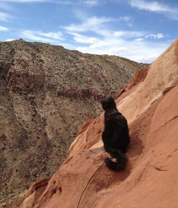 millie-gato-escalador-04