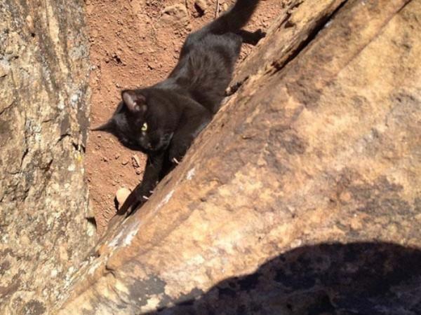 millie-gato-escalador-05