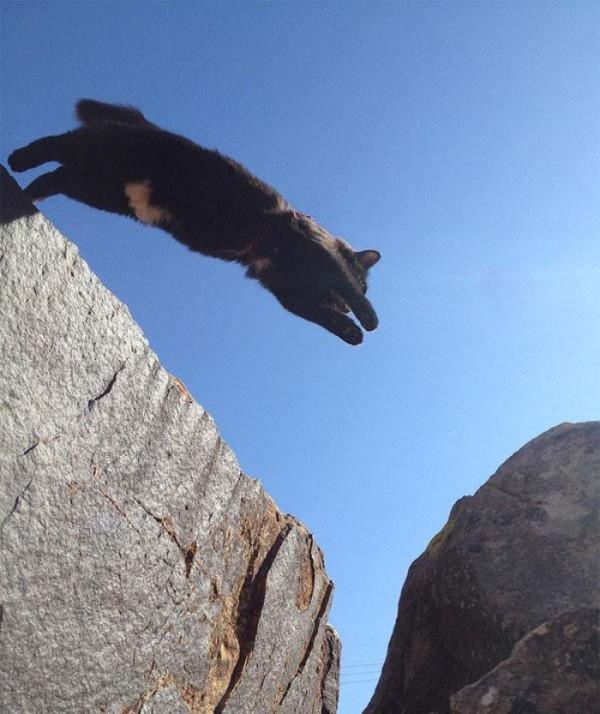 millie-gato-escalador-07