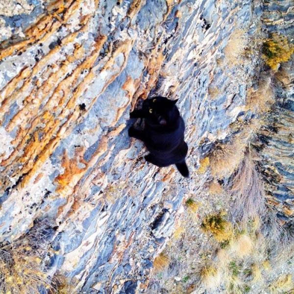 millie-gato-escalador-08