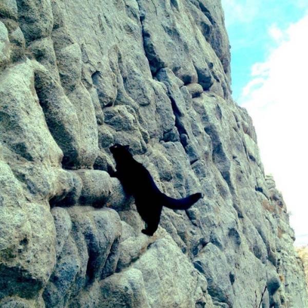 millie-gato-escalador-09
