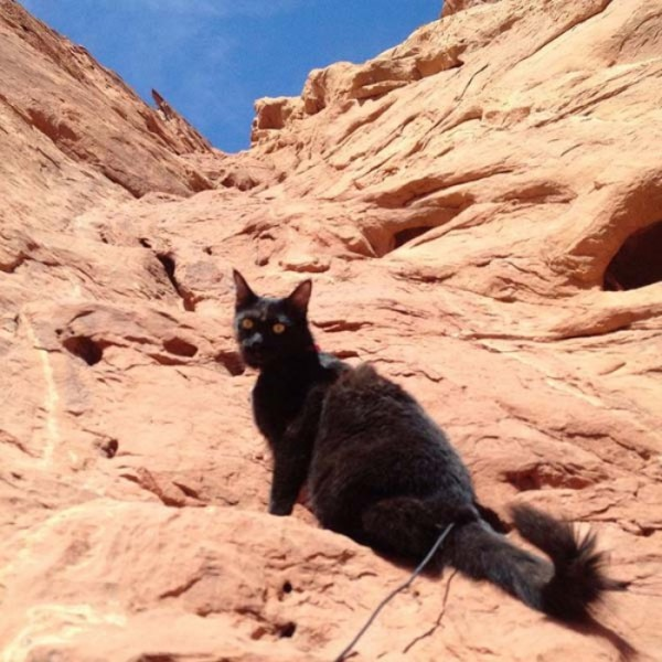 millie-gato-escalador-12