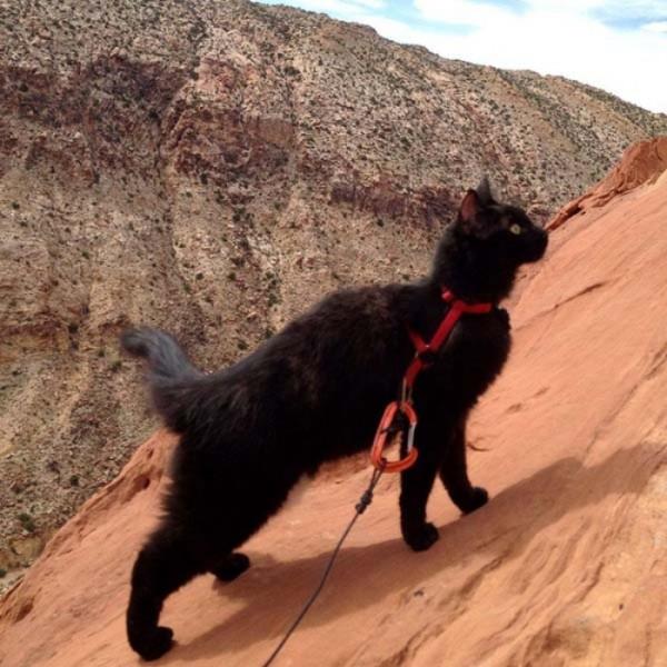 millie-gato-escalador-13