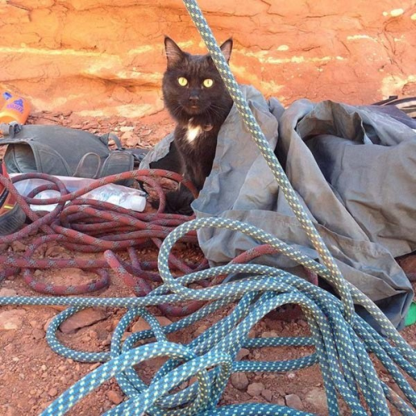 millie-gato-escalador-14