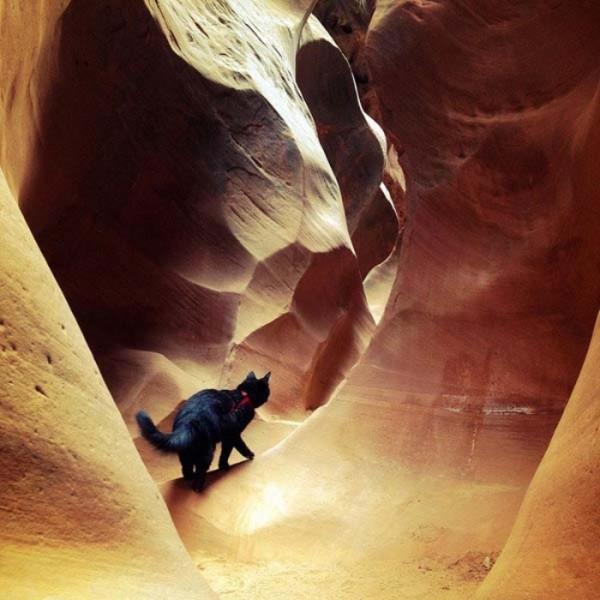 millie-gato-escalador-20