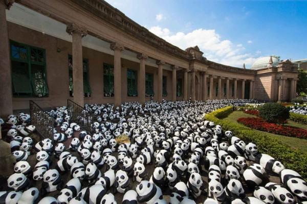 panda-papel-mache-gira-paulo-grangeon-06