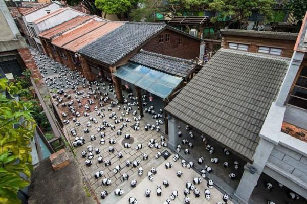 panda-papel-mache-gira-paulo-grangeon-09