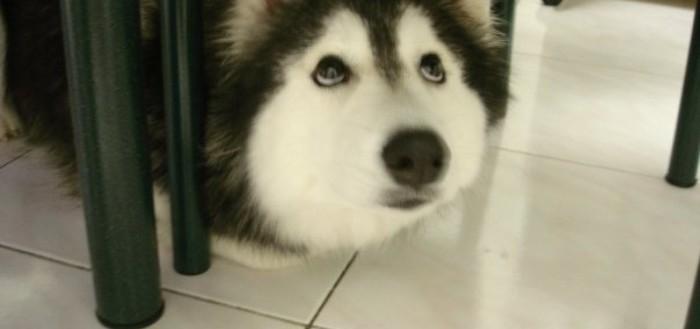 tally-perro-gatuno-00