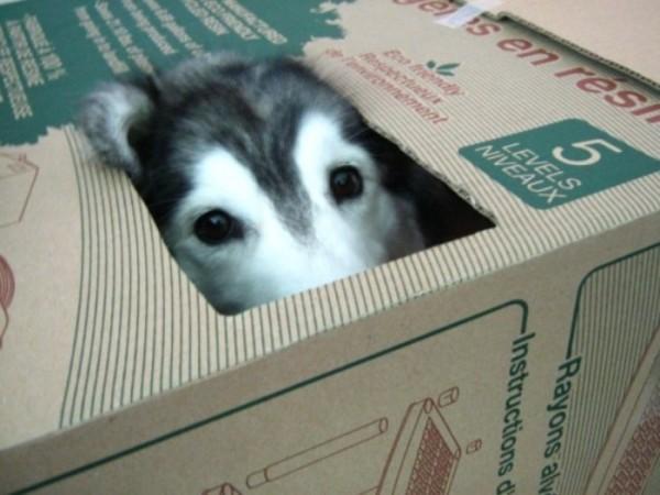 tally-perro-gatuno-03