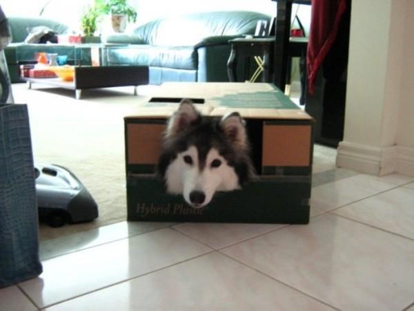 tally-perro-gatuno-04