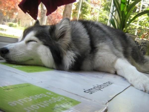 tally-perro-gatuno-11