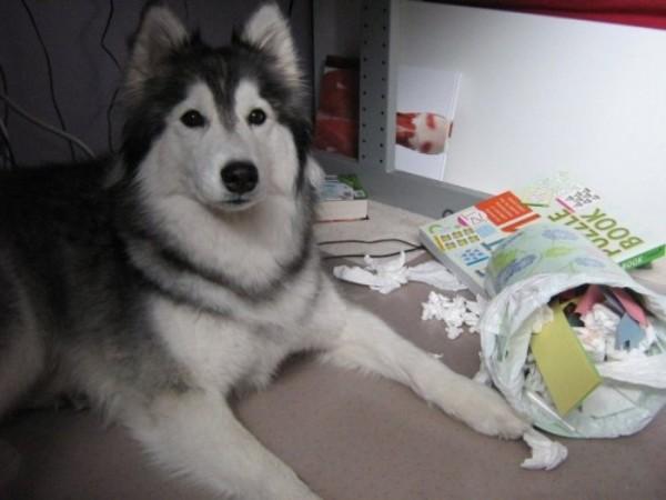 tally-perro-gatuno-12