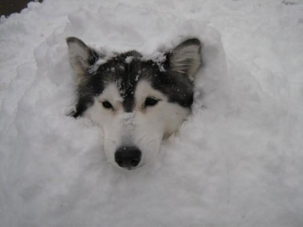 tally-perro-gatuno-17