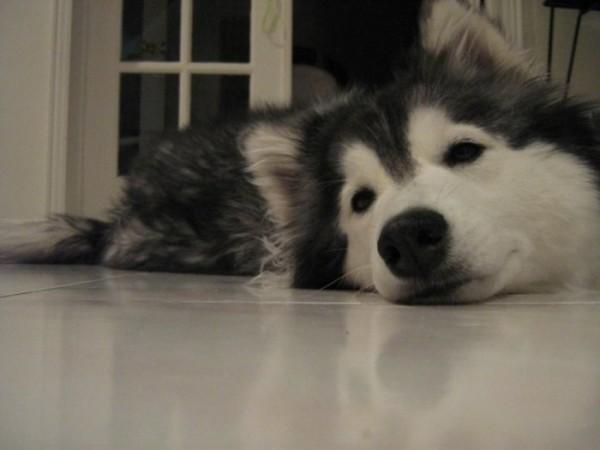 tally-perro-gatuno-18