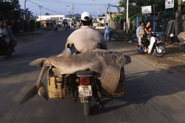transporte-con-motocicleta-en-vietnam-03
