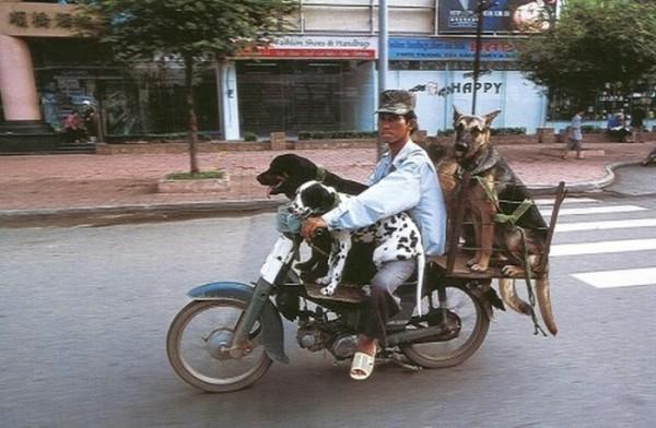 transporte-con-motocicleta-en-vietnam-16
